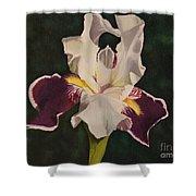 Purple And White Iris Shower Curtain