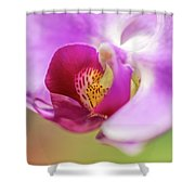 Purple And White Orchid 2 Shower Curtain