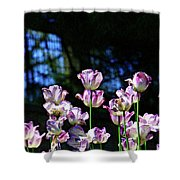 Purple And White Tulips - Photopainting Shower Curtain
