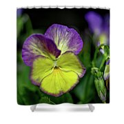 Purple And Yellow Bokeh Shower Curtain