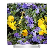 Purple And Yellow Flowers Shower Curtain