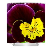 Purple And Yellow Pansy Shower Curtain