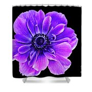 Purple Anemone Flower Shower Curtain