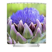 Purple Artichoke Flower  Shower Curtain