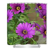 Purple Aster Flowers Shower Curtain