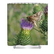 Purple Attratcion Shower Curtain