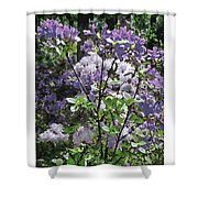 Purple Azaelas Shower Curtain
