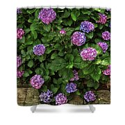 Purple Balls Of Color 2 Shower Curtain
