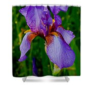 Purple Bearded Iris Portrait Shower Curtain