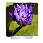Purple Biltmore Lily  Shower Curtain
