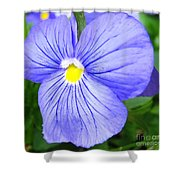 Purple Blue Pansey Shower Curtain