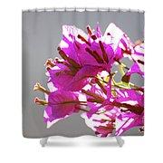 Purple Bougainvillea Flower Shower Curtain