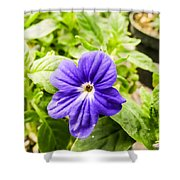 Purple Browallia Flower Shower Curtain