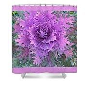 Purple Cabbage Plant Shower Curtain
