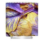 Purple Cabbage Shower Curtain