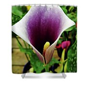 Purple - Calla Lily - Bloom Shower Curtain