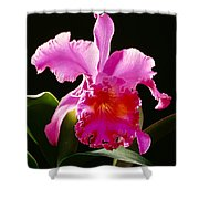 Purple Cattleya Shower Curtain by Tomas del Amo - Printscapes