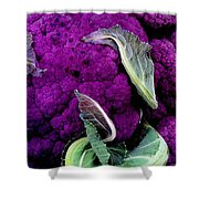 Purple Cauloflower Shower Curtain