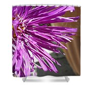 Purple Chinese Aster Shower Curtain