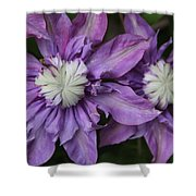 Purple Clematis 2 Shower Curtain
