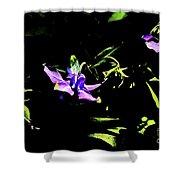 Purple Clematis 4 Shower Curtain