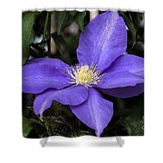 Purple Clematis Shower Curtain