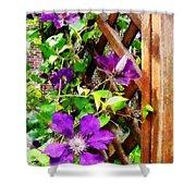 Purple Clematis On Trellis Shower Curtain