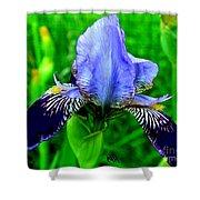Purple Coated Iris Shower Curtain