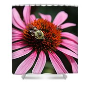 Purple Cone Flower 3 Shower Curtain