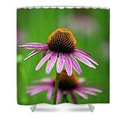 Purple Cone Flower Shower Curtain