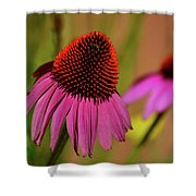 Purple Coneflower Shower Curtain