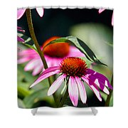 Purple Cones And Honey Bees Shower Curtain