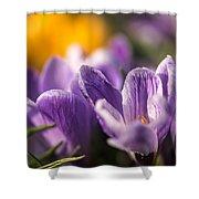 Purple Crocus Shower Curtain
