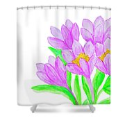 Purple Crocuses, Painting Shower Curtain