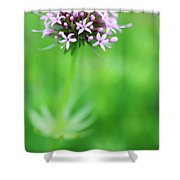 Purple Crosswort Flower Shower Curtain