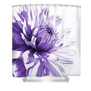 Purple Dahlia Floral Shower Curtain