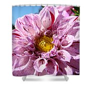Purple Dahlia Flowers Pink Floral Art Prints Canvas Garden Baslee Troutman Shower Curtain
