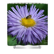Purple Daisy And Guest Shower Curtain