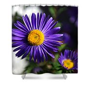 Purple Daisy Shower Curtain by Yew Kwang