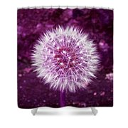 Purple Dandy Shower Curtain