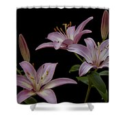 Purple Day Lilies Shower Curtain