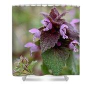 Purple Deadnettle Bloom Shower Curtain