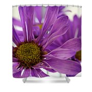 Purple Delight Shower Curtain