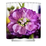 Purple Delphinium Shower Curtain
