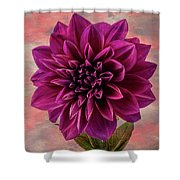 Purple Dhalia Shower Curtain