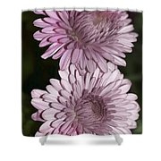 Purple Duo Shower Curtain