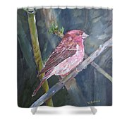 Purple Finch Shower Curtain