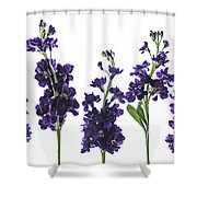 Purple Floral 1 Shower Curtain