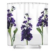 Purple Floral 2 Shower Curtain