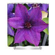 Purple Floral Shower Curtain